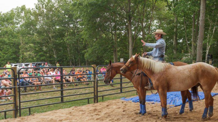 horse-activity